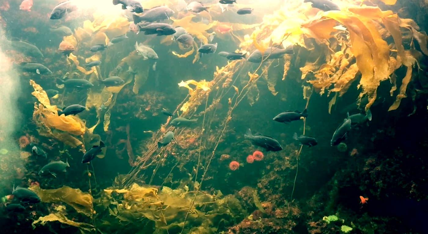 iPhoneとiMovieで動画編集「水族館」